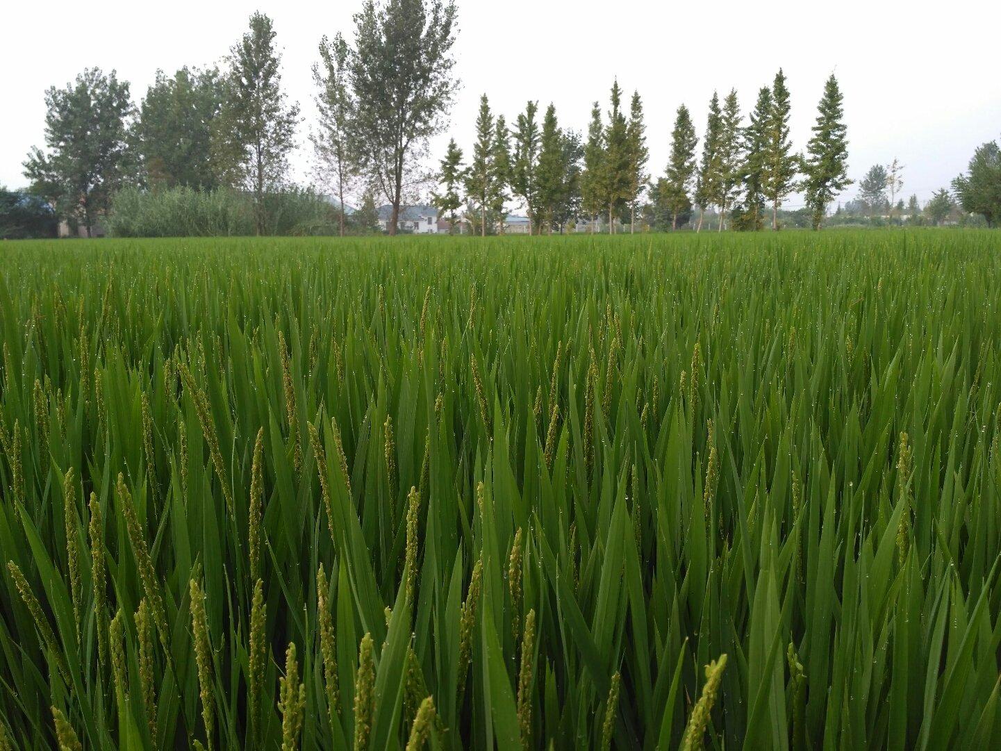 江苏省南通市如东县624乡道靠近杨家高码头天气预报