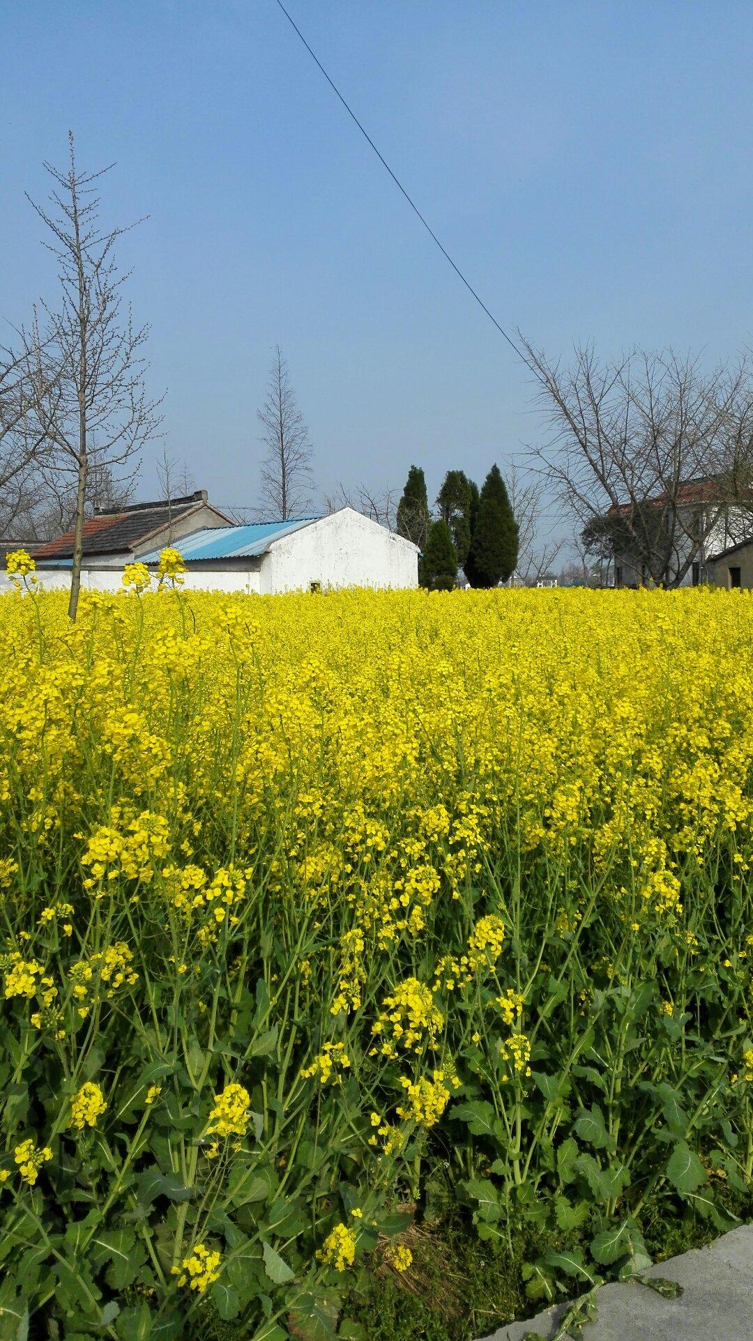 江苏省南通市海安县432乡道靠近兴隆七组天气预报
