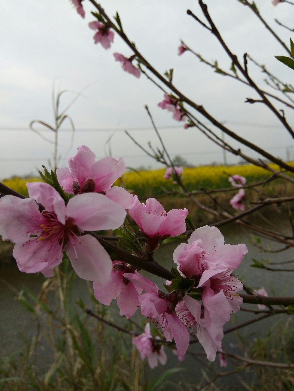 江苏省南通市海安县大公镇353省道天气预报