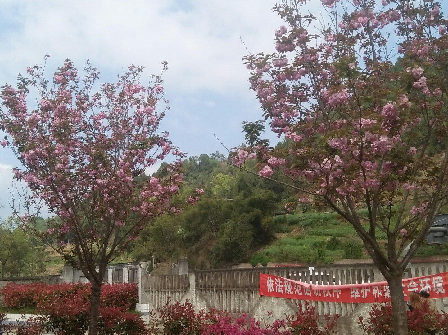 四川省绵阳市三台县盐三路靠近秋林镇车站天气预报图片