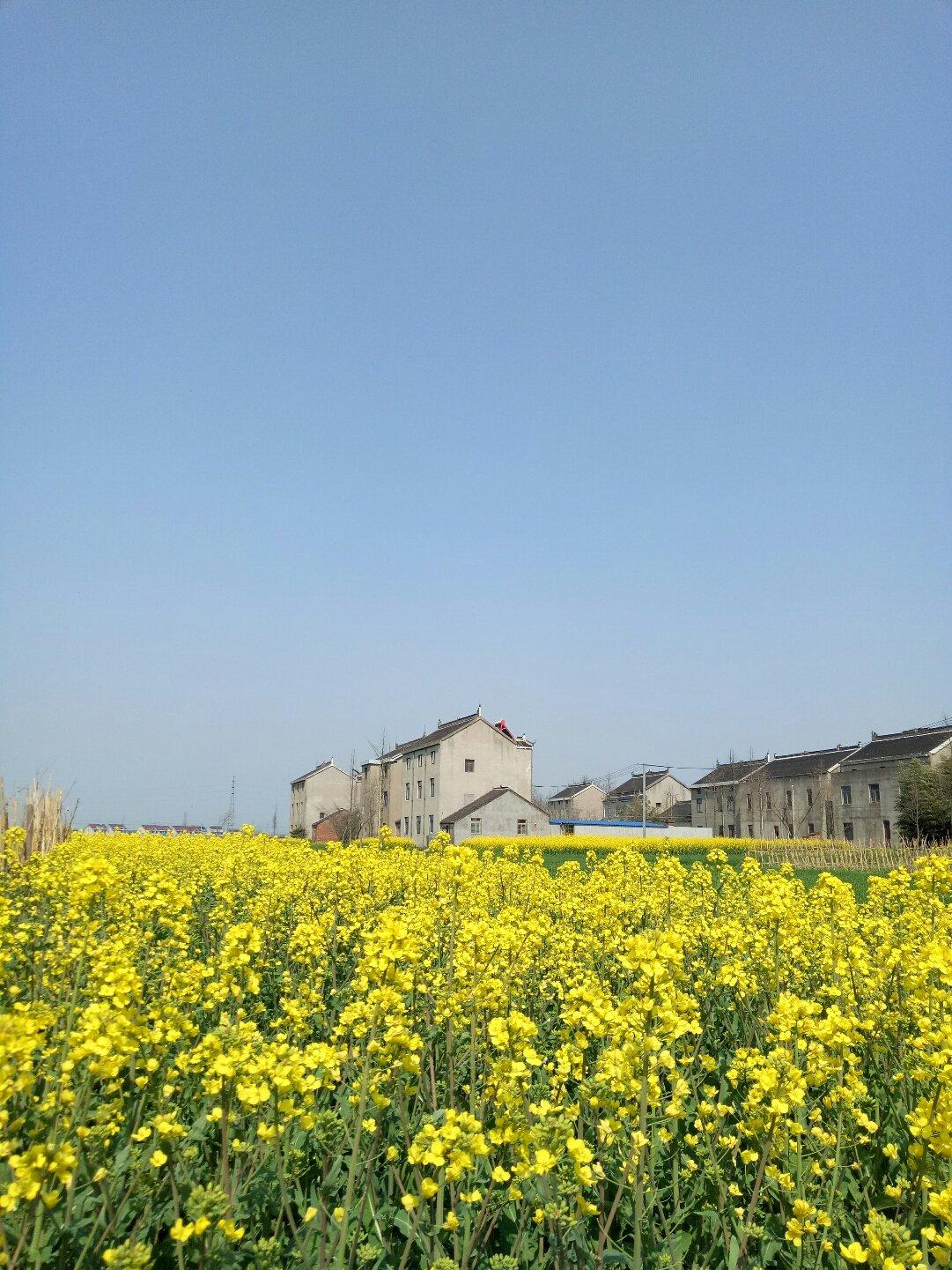江苏省南通市如皋市徐东线靠近环庄村天气预报