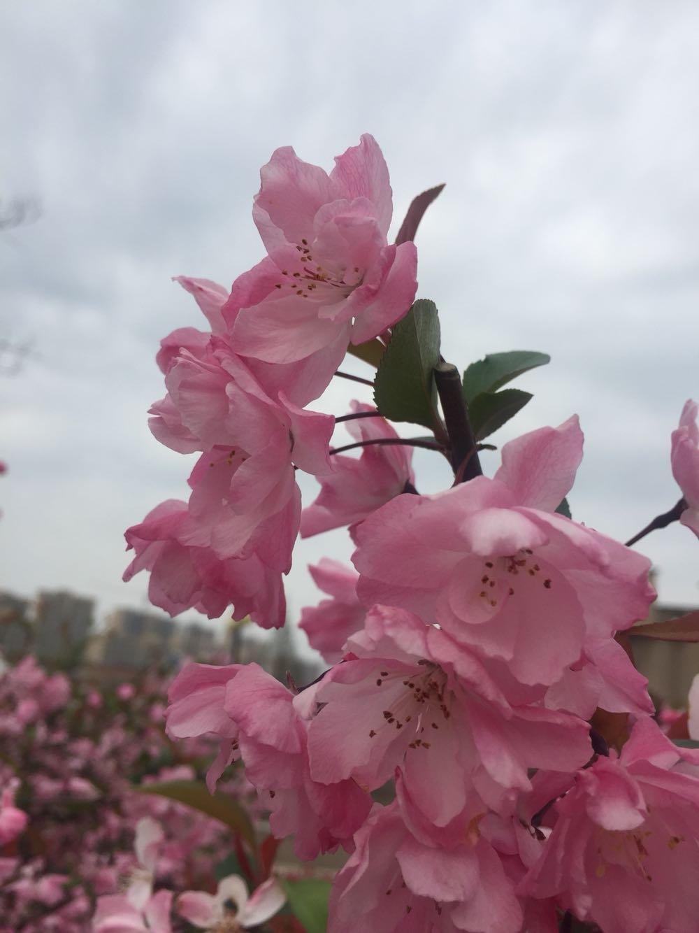 南通市如东县_海一直很安静分享_天气时景_预报查询