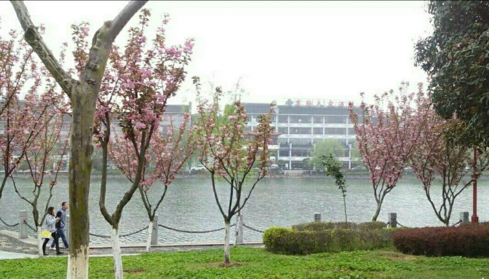 湖北省孝感市孝南区长兴路靠近万通大厦图片