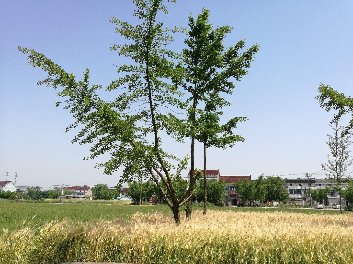 江苏省泰州市高港区_江苏省泰州市高港区s35泰镇高速靠近新庄子天气预报