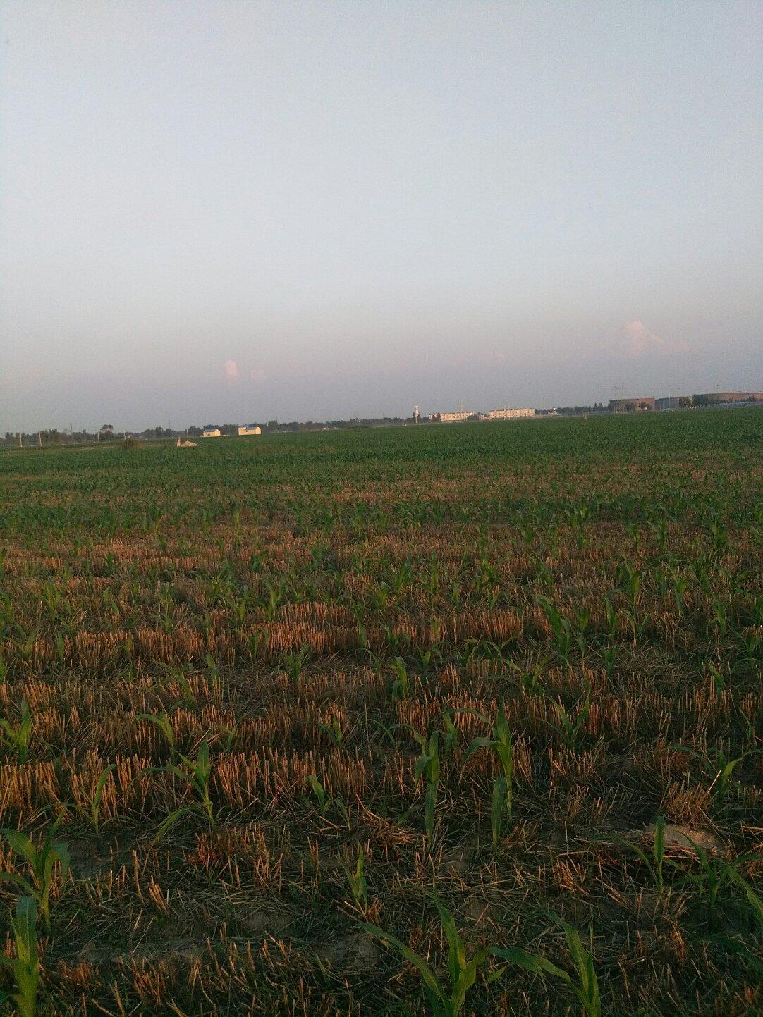山东省德州市临邑县079乡道靠近七里庙村天气预报