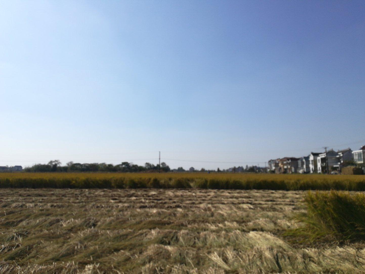江苏省南通市如东县苴东线靠近园新村天气预报