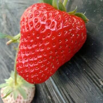 丹东久久草莓店
