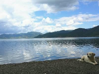 #城事#泸沽湖怡然自得的狗狗,有美景相伴,幸福发呆😳