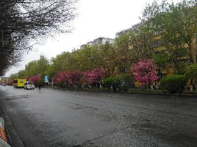 美丽新疆红花绿叶