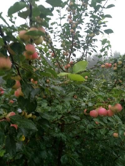 下雨了也到秋了农安县,阴,23℃,东南风2级。