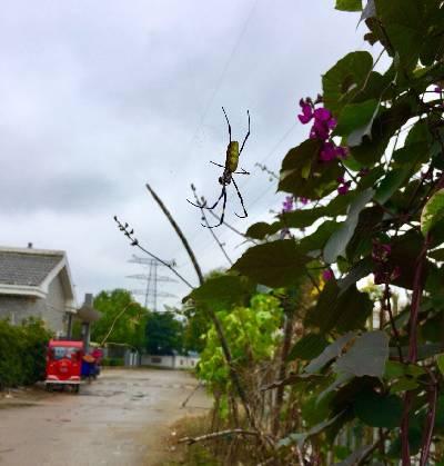 奇特的蜘蛛