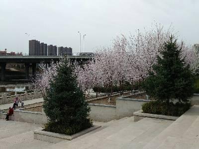 呼和浩特市,多云,13℃,东风2级。