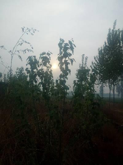 辛集市,阴,10℃,西北风1级。
