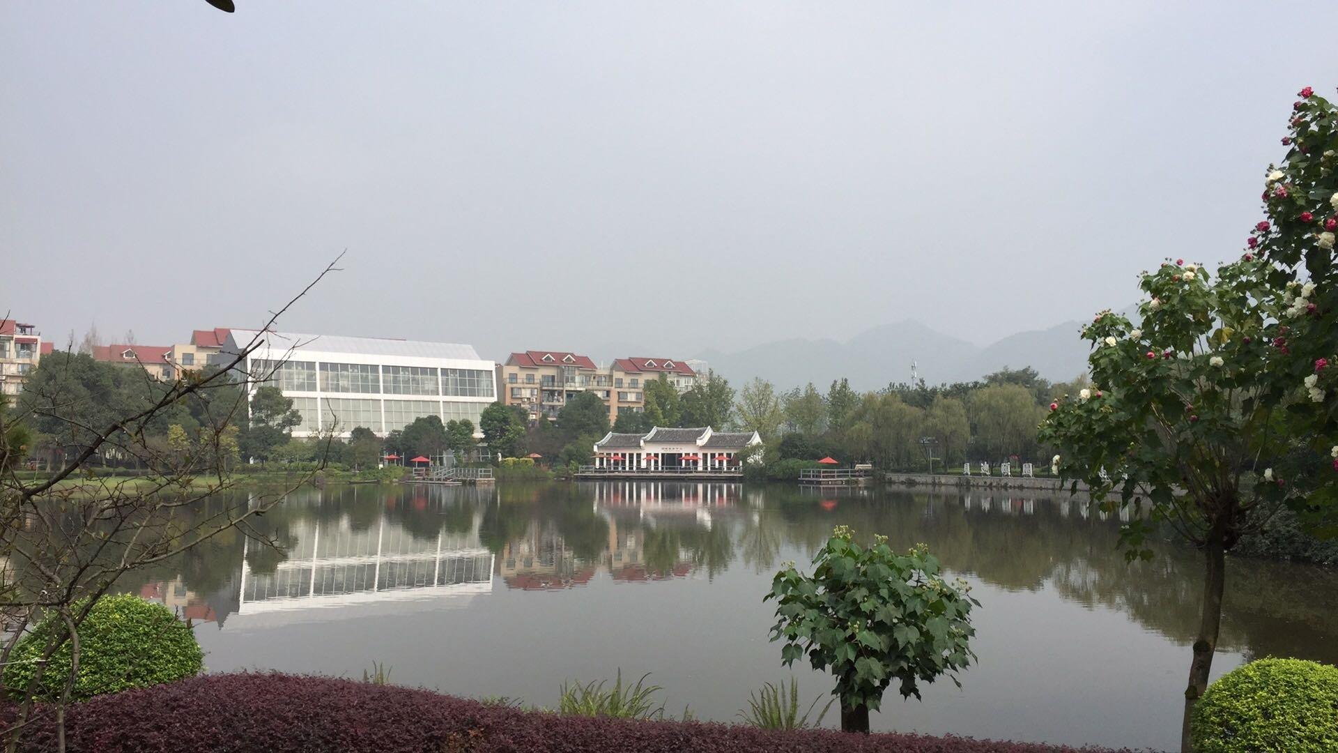 重庆市九龙坡区天气预报
