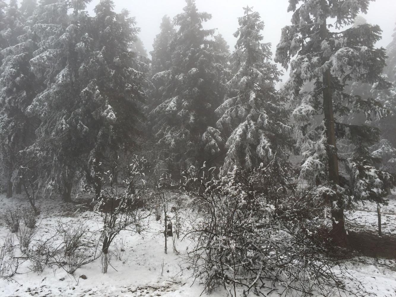 仙女山国家森林公园天气预报