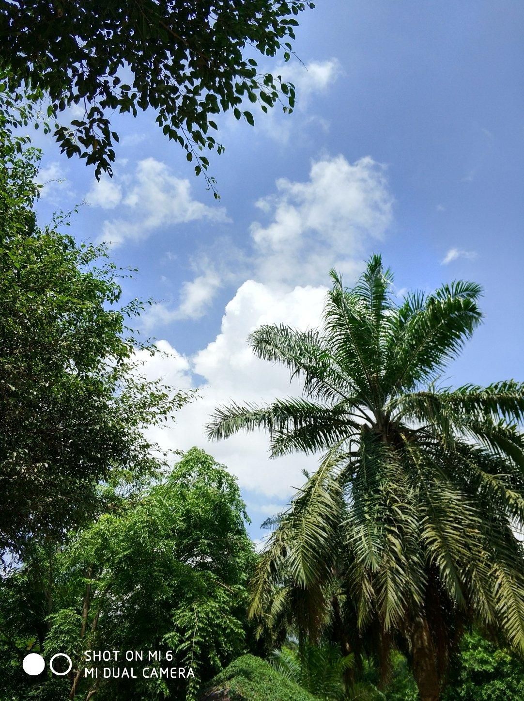 海南省海口市秀英区东山镇海南热带野生动植物园天气预报