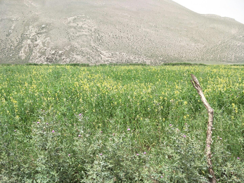 新疆维吾尔自治区新疆维吾尔自治区昆玉市564县道靠近曼其巴喀什天气预报