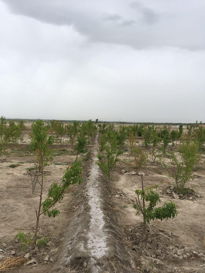 喀什地区岳普湖县天气预报