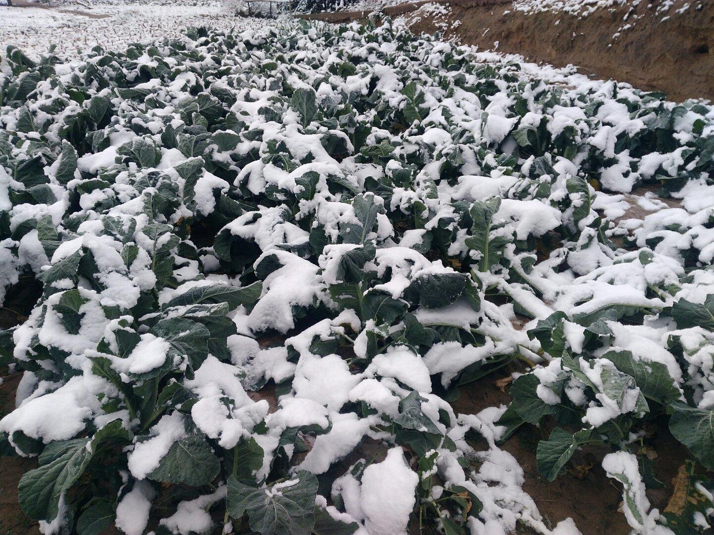 中国甘肃省定西市临洮县Y168天气预报