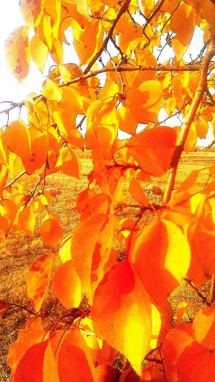 新疆维吾尔自治区昌吉回族自治州木垒哈萨克自治县英格堡乡马场窝子村天气预报