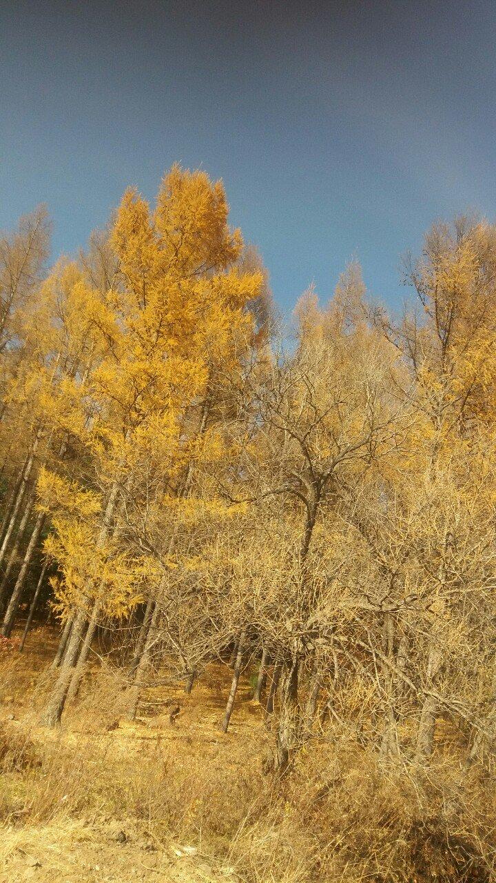 黑龙江省牡丹江市穆棱市093乡道靠近红岩哈沟天气预报