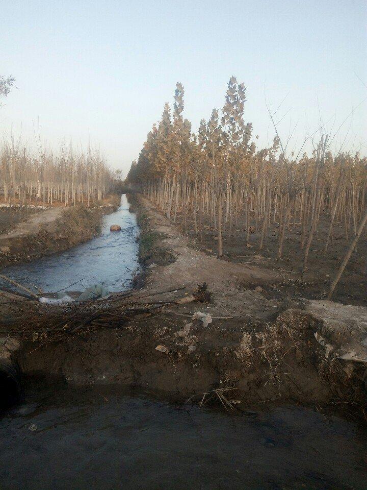 新疆维吾尔自治区图木舒克市滨河大道靠近丰华美景小区天气预报