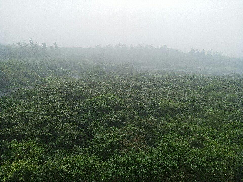 海南省海口市琼山区202省道靠近米兰园15幢天气预报