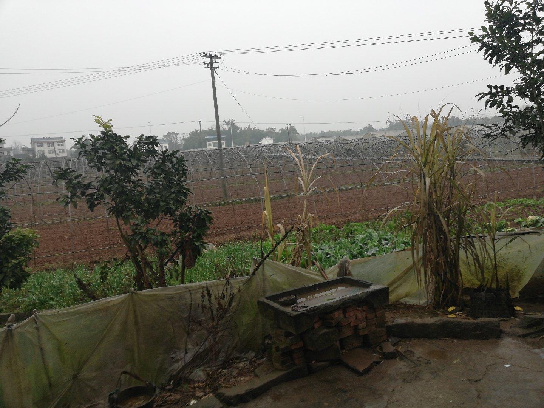 重庆市潼南区韦罐路靠近重庆市无公害蔬菜生产技术培训中心天气预报