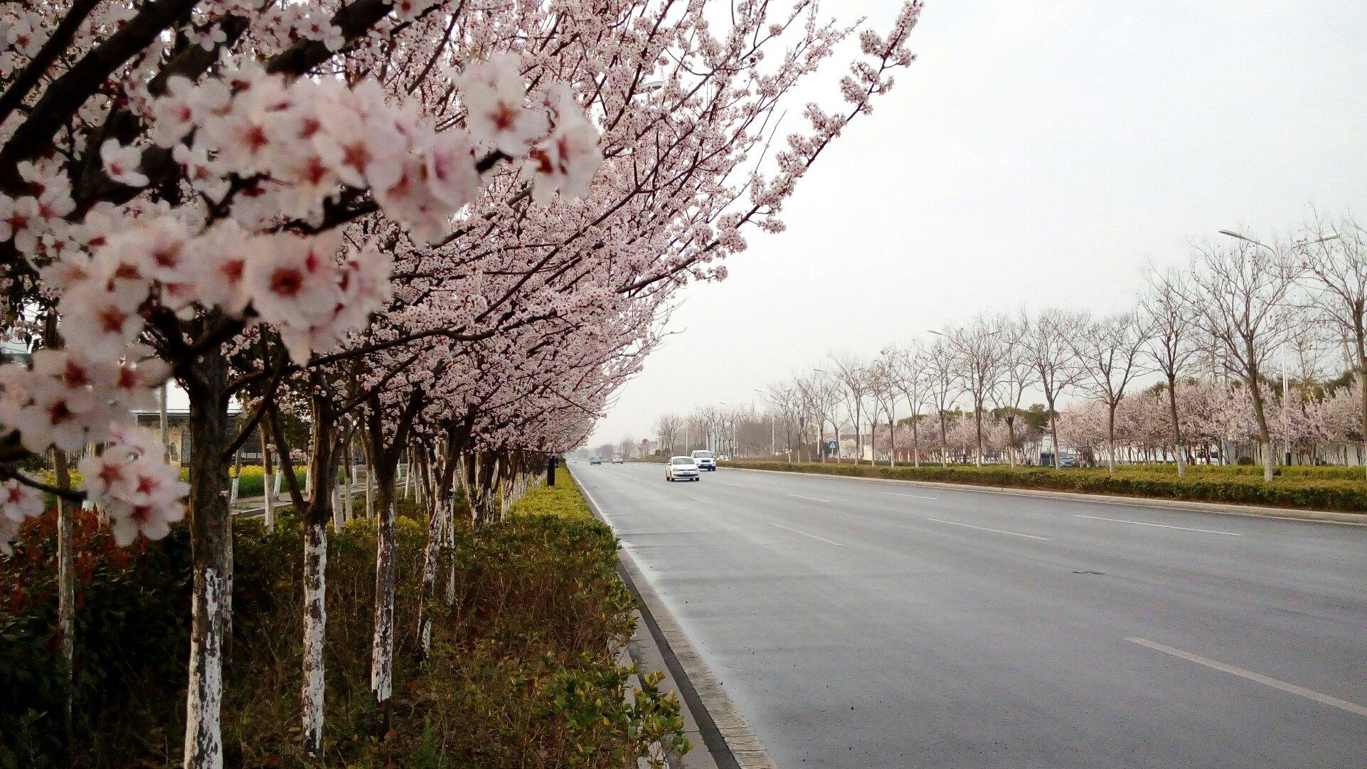 安徽省淮北市杜集区梧桐中路靠近徐庄羊肉板面馆天气预报