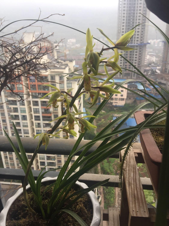 重庆市郊县石柱土家族自治县万寿大道157号附近天气预报