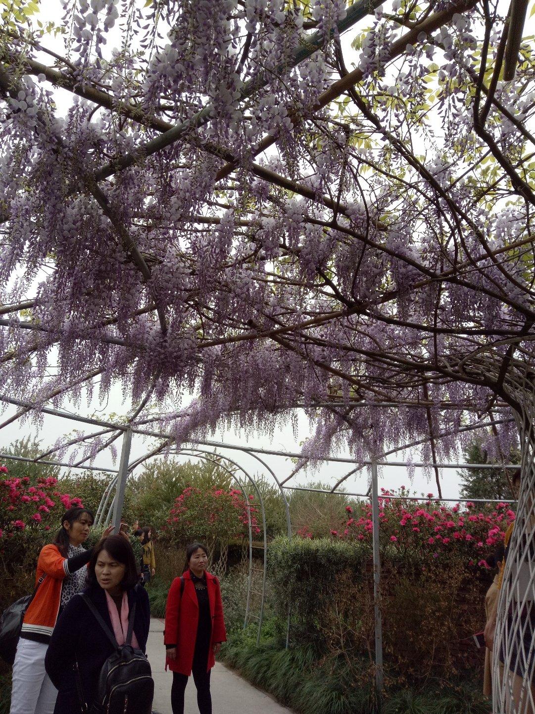 重庆市北碚区巴南广高速靠近奇峰葡萄园天气预报