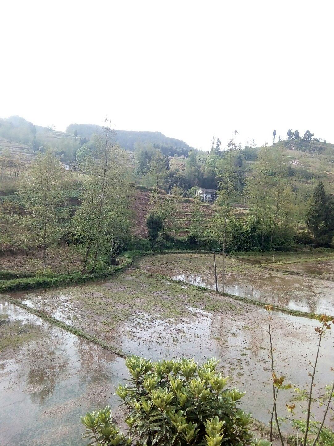 重庆市石柱土家族自治县590县道靠近光明村天气预报
