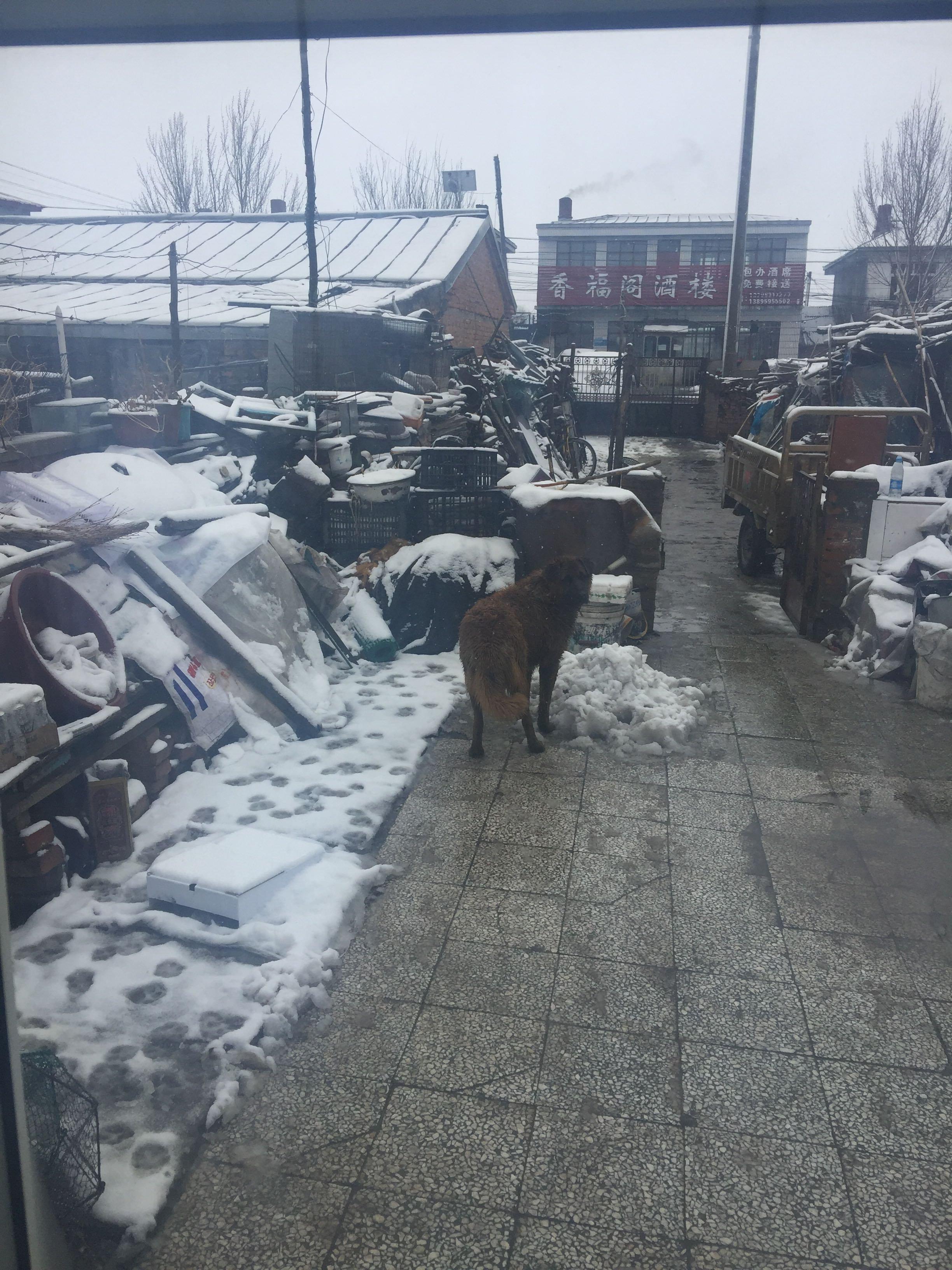 齐齐哈尔市克山县天气预报