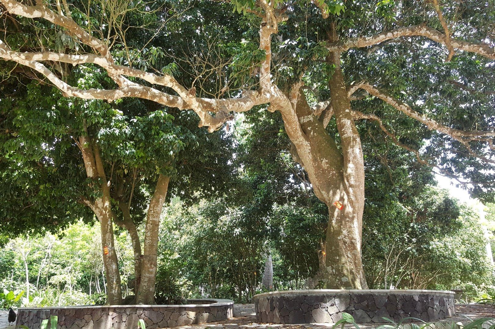 海南省儋州市国营西培农场255乡道天气预报