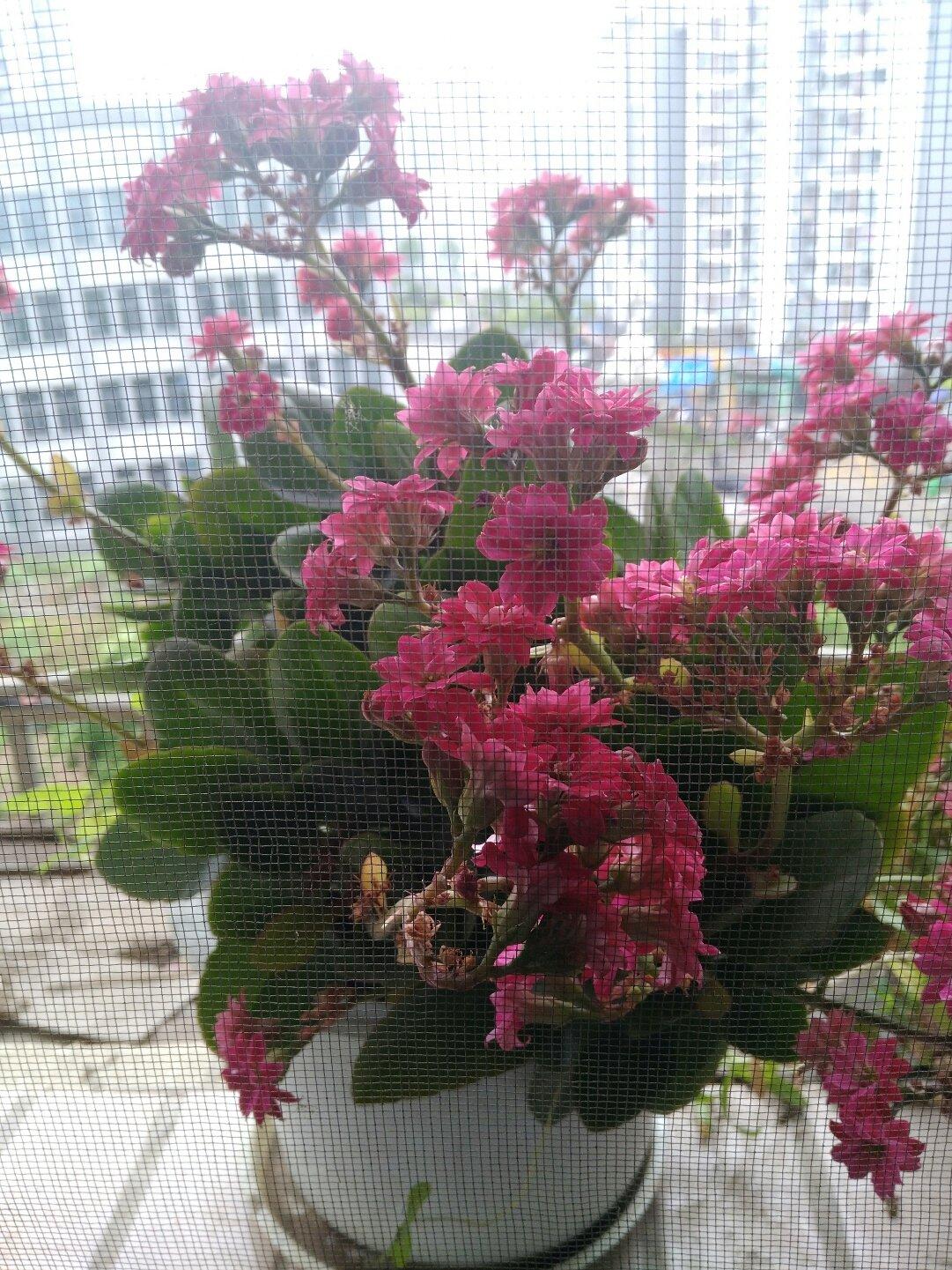 重庆市石柱土家族自治县都督大道靠近寨子柴火鸡天气预报