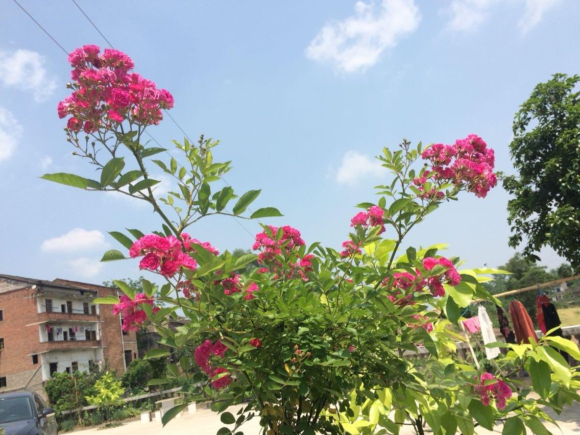 重庆市长寿区102省道天气预报
