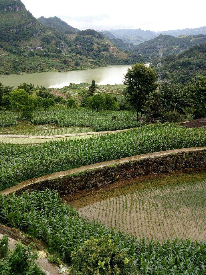 重庆市彭水苗族土家族自治县靠近木桐坝天气预报
