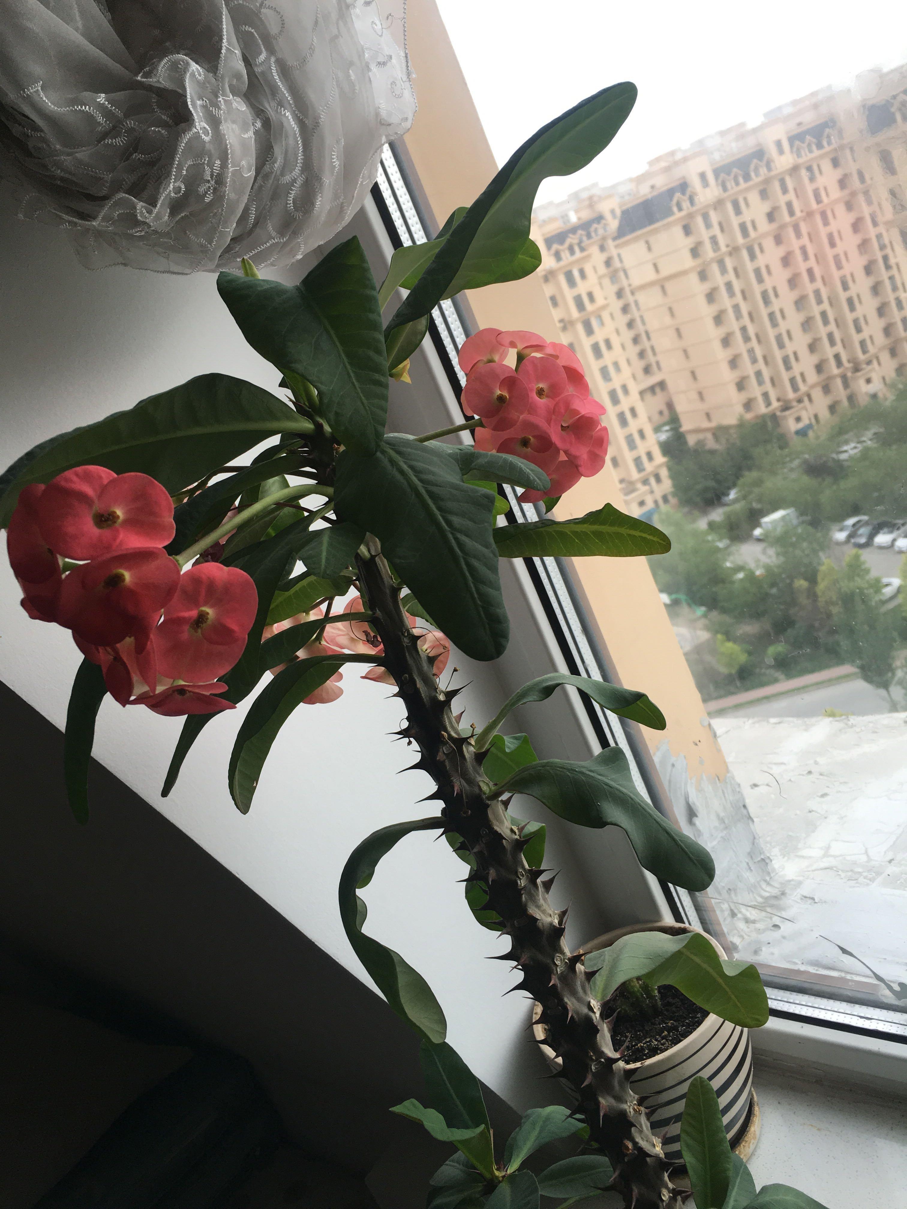 哈尔滨市呼兰区利民大道879号天气预报