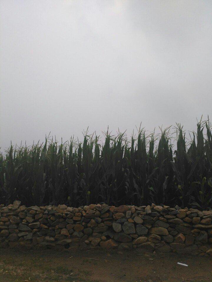辽宁省朝阳市北票市七冯线靠近西南沟天气预报