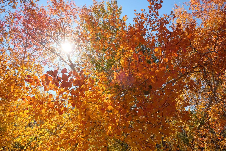 阿勒泰地区布尔津县贾登峪国家森林公园天气预报