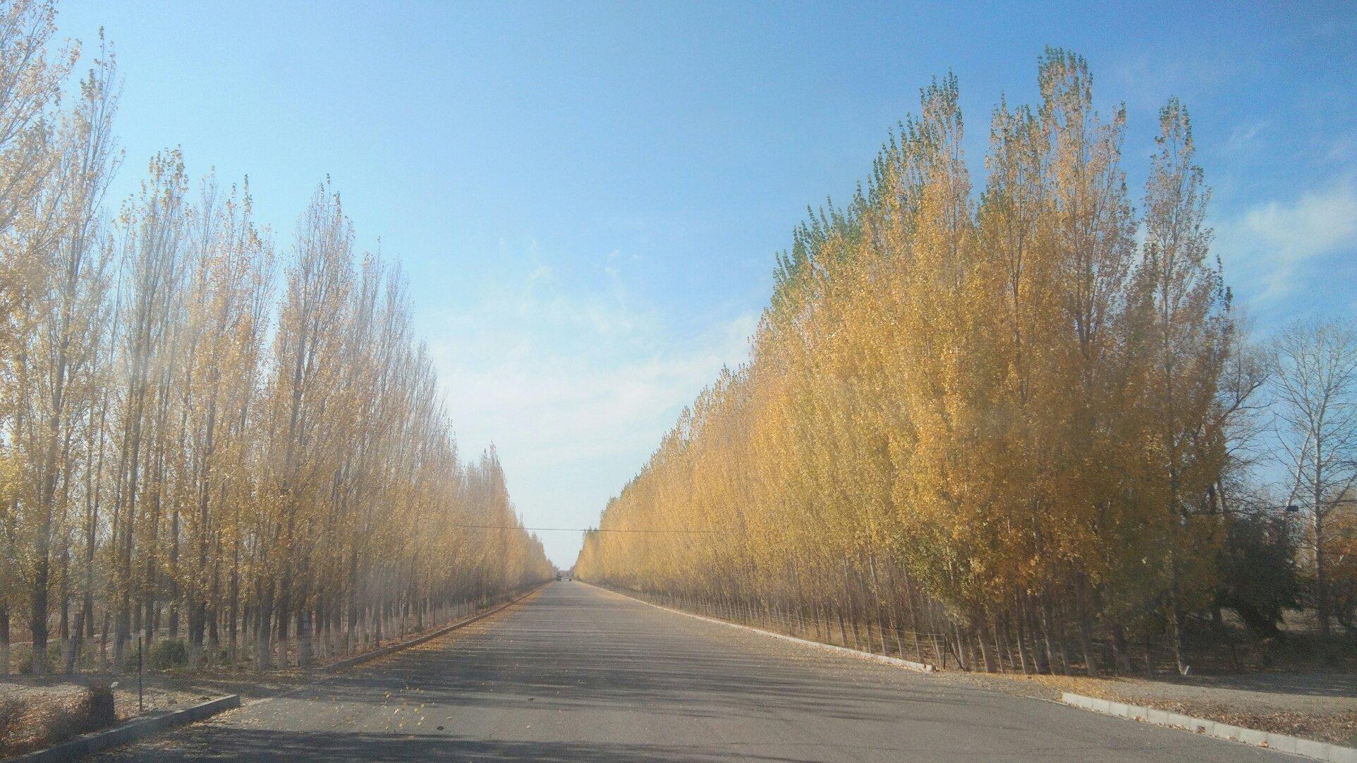 新疆维吾尔自治区阿勒泰地区阿勒泰市农林巷靠近阿勒泰地区行署农业局天气预报
