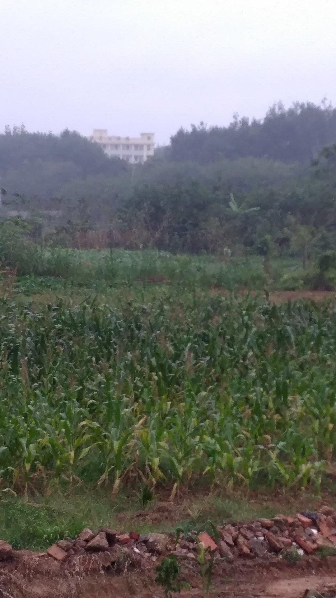 海南省儋州市505县道靠近儋州市那大镇洛基卫生院天气预报