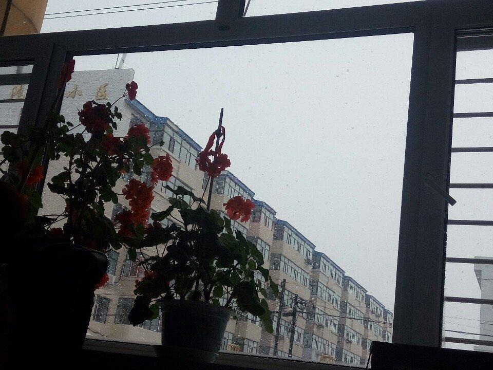 黑龙江省鹤岗市绥滨县向阳路靠近观江国际天气预报