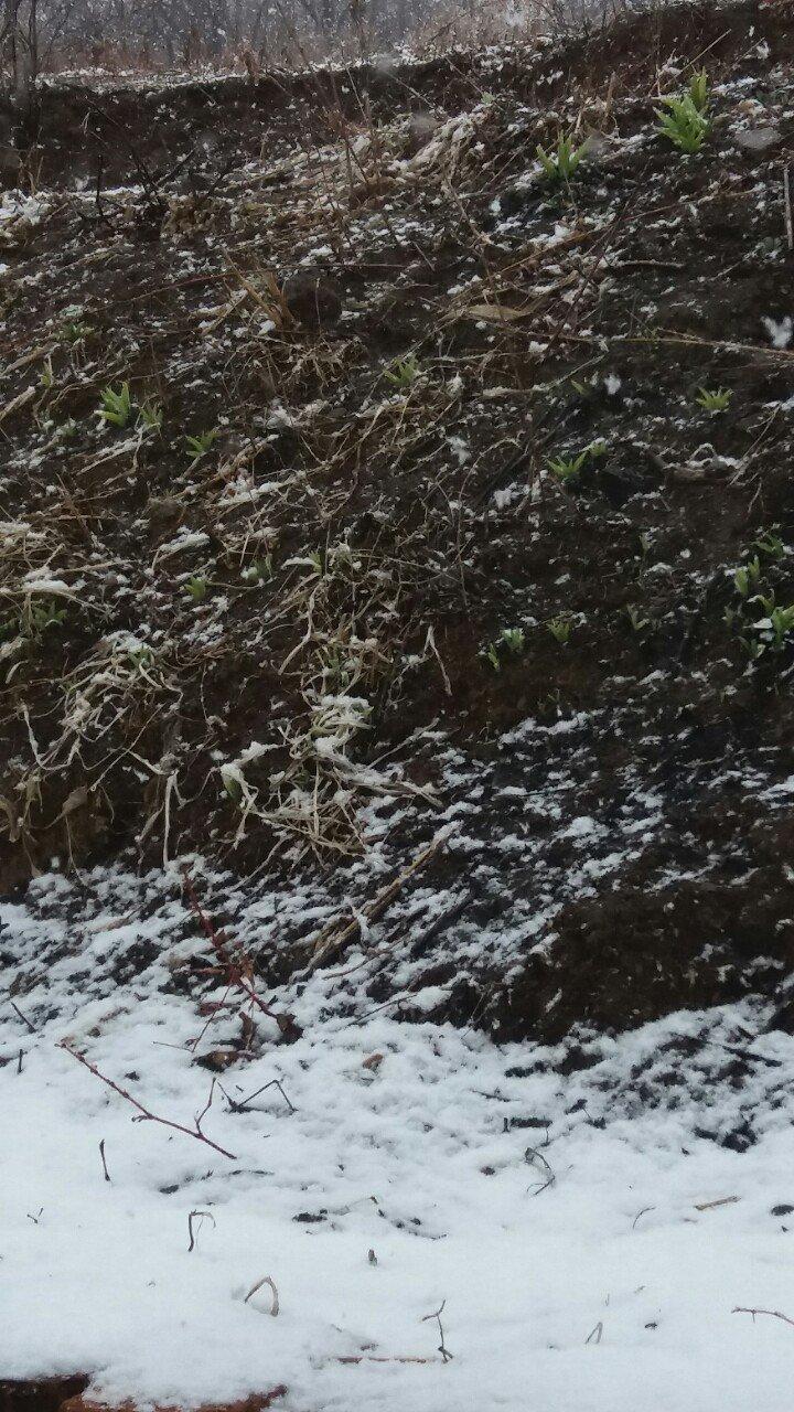 辽宁省丹东市宽甸满族自治县黄椅山路靠近川北天气预报
