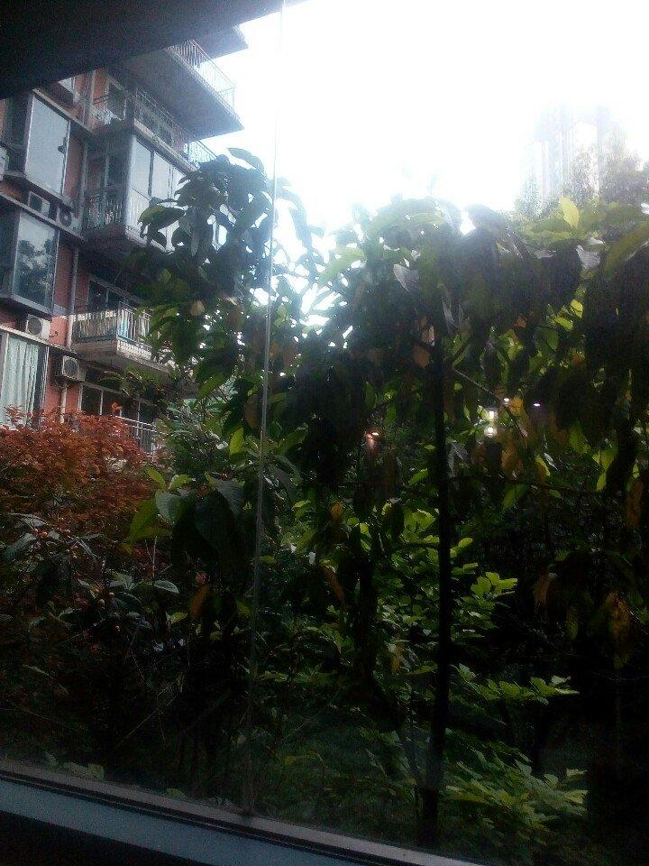 重庆市九龙坡区陈庹路靠近朵力名都天气预报