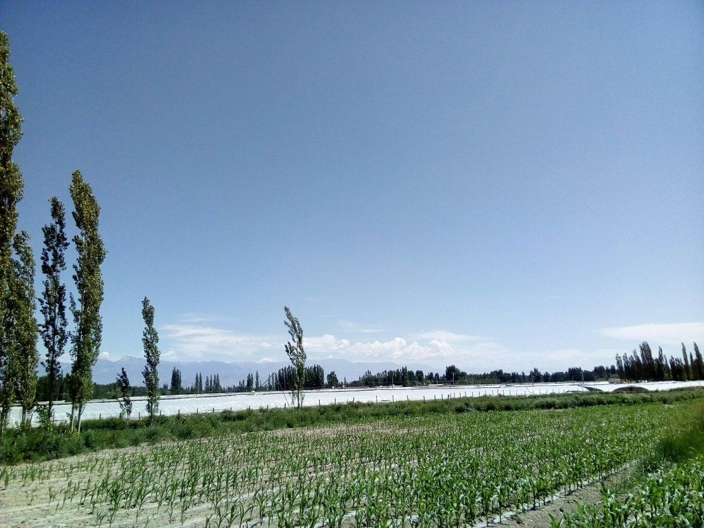 新疆维吾尔自治区巴音郭楞蒙古自治州和静县218国道靠近番昌番茄制品有限公司上游分公司天气预报