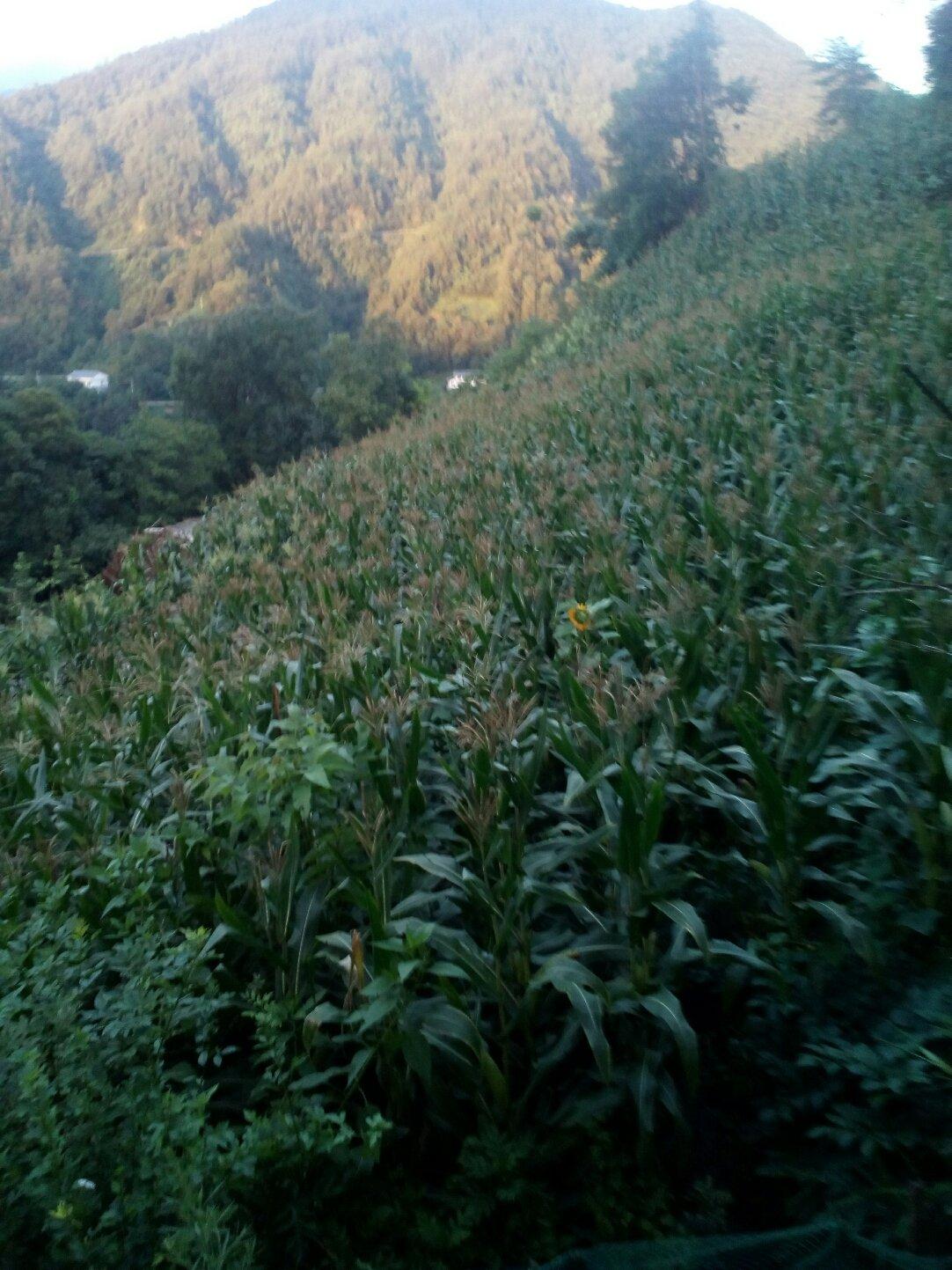 重庆市城口县028县道靠近洞子坪天气预报